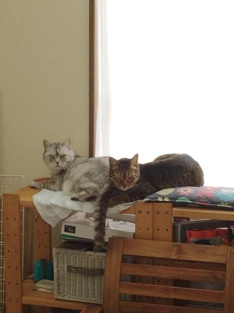 20150601cats - 9