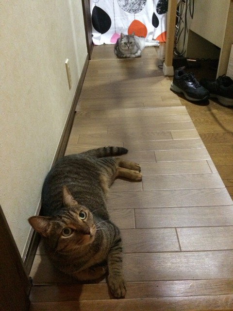 20150806cats - 1