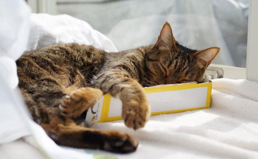 暴れる猫への強制給餌のやり方