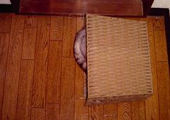 izone550隠れ猫.jpg