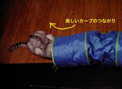 izone 550隠れ猫2.jpg
