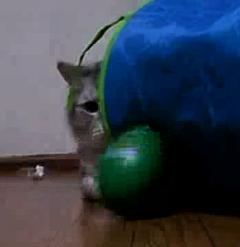 がっちり狙う猫.jpg